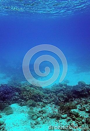 Recife coral e areia subaquáticos