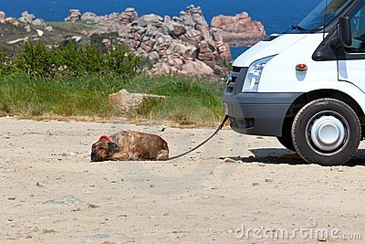 Recreational vehicle and a dog