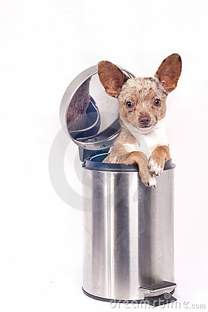 Recycle bin dog