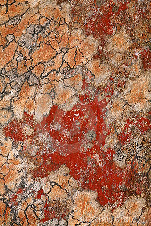 Red Algae Rock Pattern