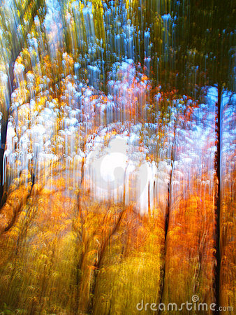 Free Red And Green Autumn Forest Stock Image - 16828811
