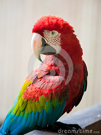 Free Red-and-green Macaw Stock Images - 66615434