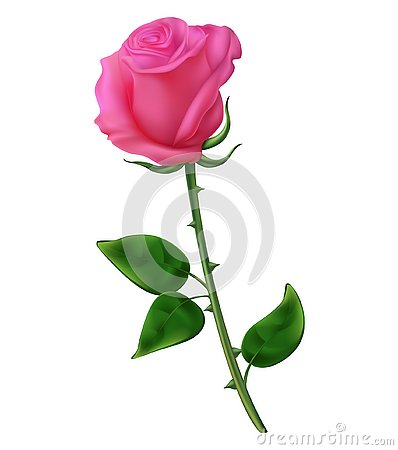 Free Red And Pink Roses, A Lily With Buds And Green Leaves. Realistic Flowers Royalty Free Stock Photos - 127494548
