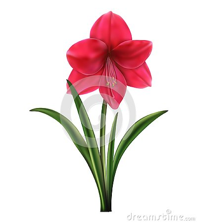 Free Red And Pink Roses, A Lily With Buds And Green Leaves. Realistic Flowers Royalty Free Stock Images - 127494549
