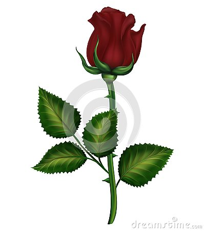 Free Red And Pink Roses, A Lily With Buds And Green Leaves. Realistic Flowers Stock Photo - 127494550
