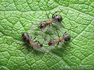 Red ants connection with antennas