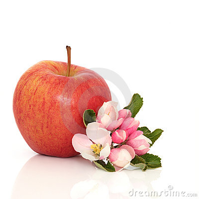 Red Apple and Flower Blossom