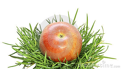 A red apple on a grass on a white background