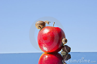 Red apple and  snails on mirror