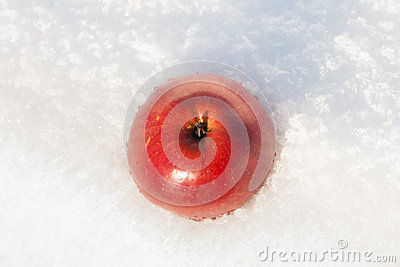 Red apple on a snow