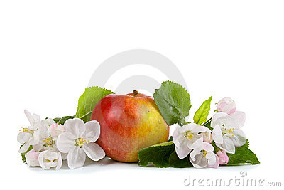 Red apple and white flowers
