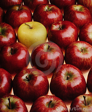 Free Red Apples Stock Image - 303531