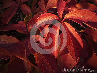 Red at autumn