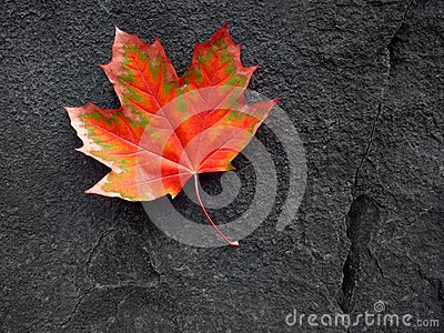 Red Autumn Leaf and Black Rock