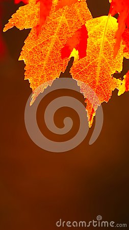 Free Red Autumn Leaves Royalty Free Stock Photography - 103562307