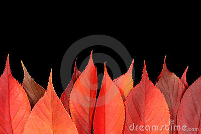 Red autumn leaves forming a firey flame