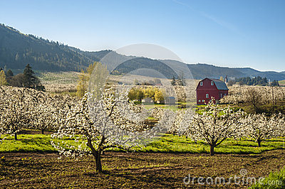 Red barn, apple orchards