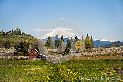Red barn, apple orchards, Mt. Adams