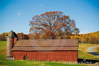 Red Barn With Autumn Tree