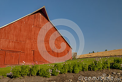 Red barn in the country farm