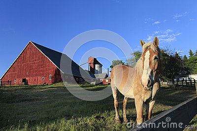 Red Barn with Palomino