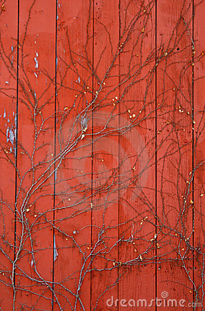 Red Barn Paneling with Vines