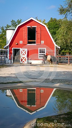 Free Red Barn Reflected In Rain Puddle Stock Photography - 126833942
