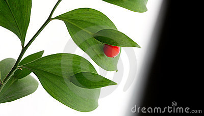 Red berry on green brunch