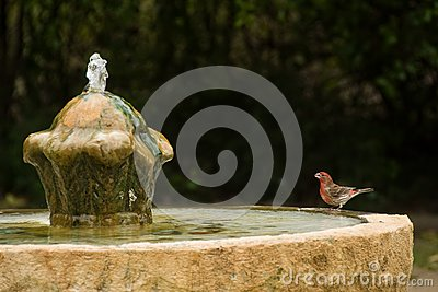 red  bird sets on edge of old fountain staring up