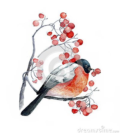 Red bird on the wild ash branch with red berries Cartoon Illustration