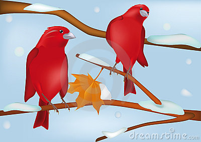 Red birds in the winter