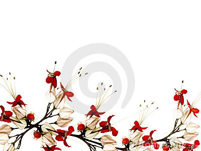 Red and black butterfly flowers