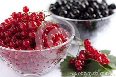 Red and black currants, berries