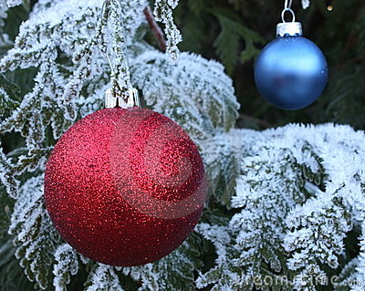 Red And Blue Baubles On Frost Tree Royalty Free Stock Image - Image: 12850736
