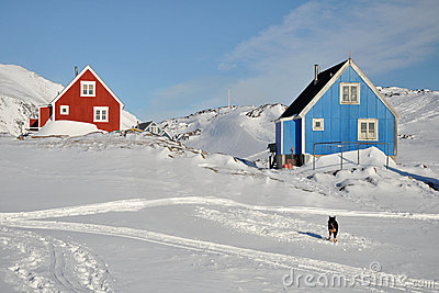 Red and blue cabins and dog in winter, Greenland