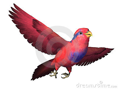 Red and Blue Lory Flying