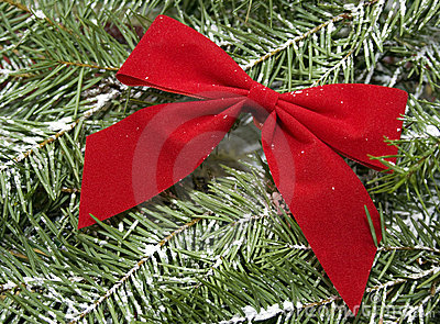 Red bow on snow covered evergreen Christmas tree