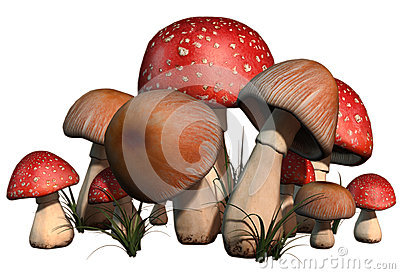 Red and brown mushrooms Stock Photo