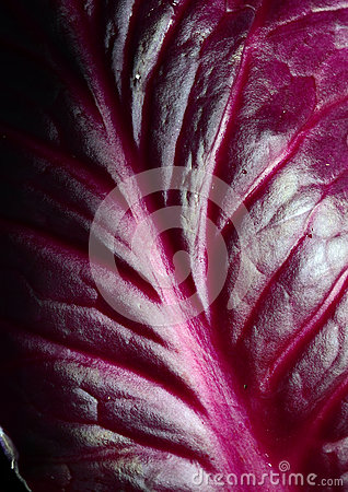 Red Cabbage Leaf Stock Photo - Image: 65856104