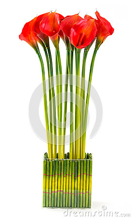 Free Red Calla Lily Stock Photos - 32036943