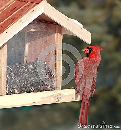 Free Red Cardinal At Bird Feeder Stock Image - 2526941