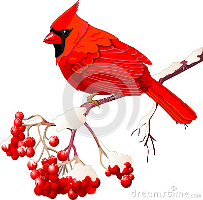 Free Red Cardinal Bird Royalty Free Stock Image - 27954346