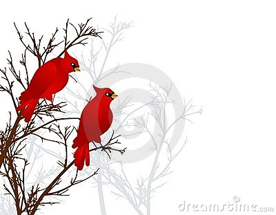 Red Cardinals Sitting In Tree