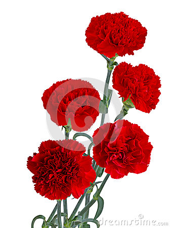 Free Red Carnation Bouquet Stock Photography - 52480062