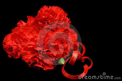 Red Carnations Isolated on Black