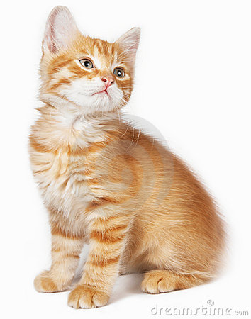 Free Red Cat Royalty Free Stock Image - 16547156