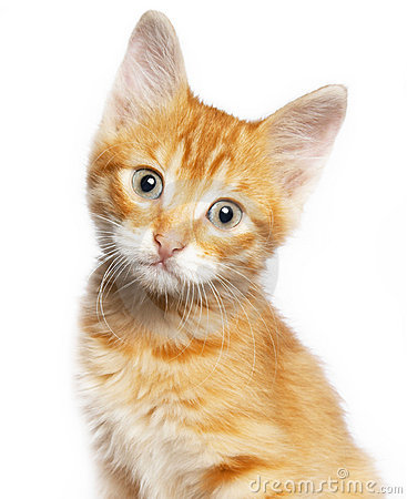 Free Red Cat Stock Photo - 16547200