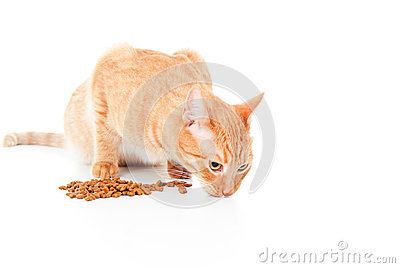 Red cat eats feed