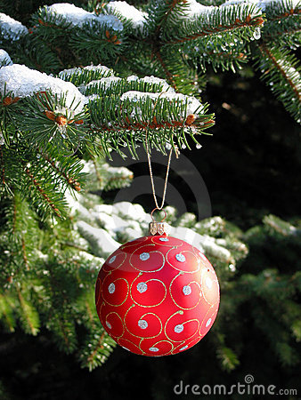 Free Red Christmas Ball On Fir Tree Royalty Free Stock Images - 365889