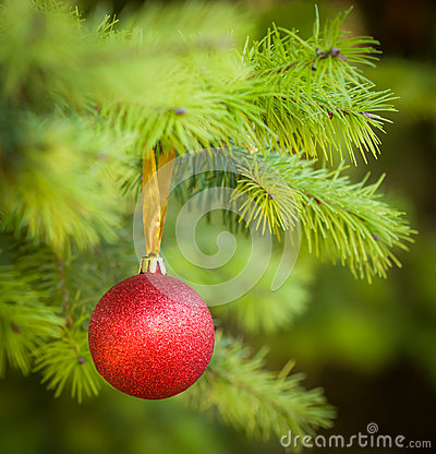 Red Christmas ball (xmas ball) on Christmas tree